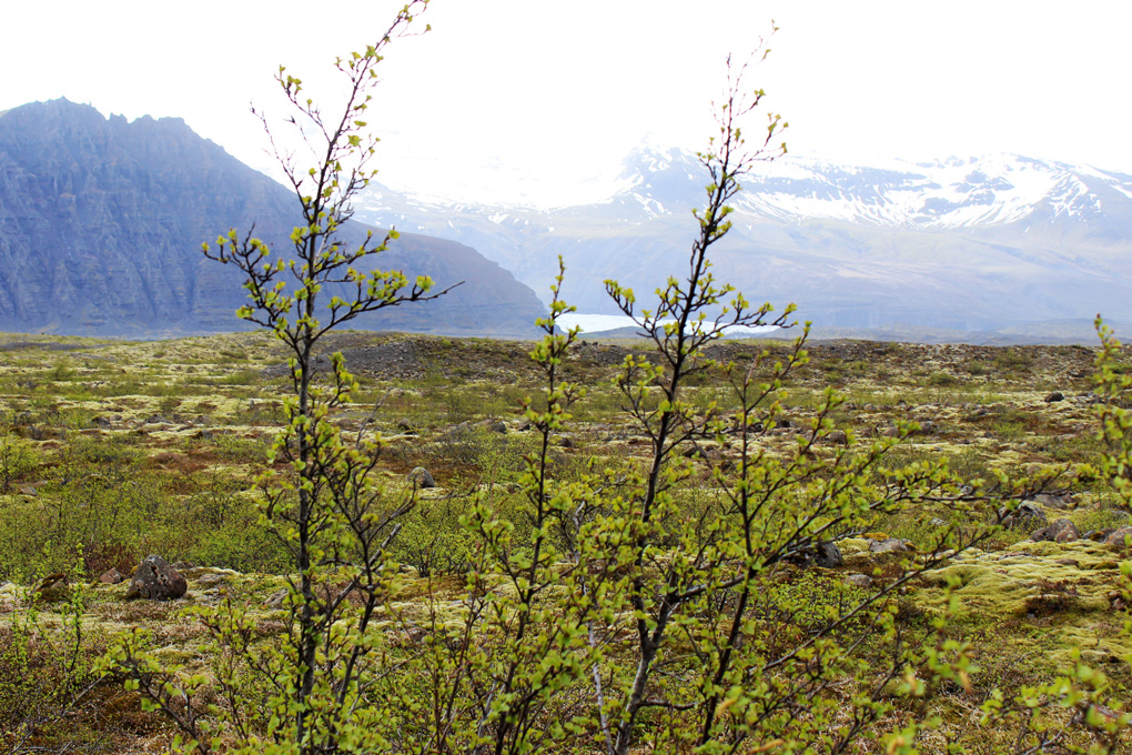 islanti luonto 17