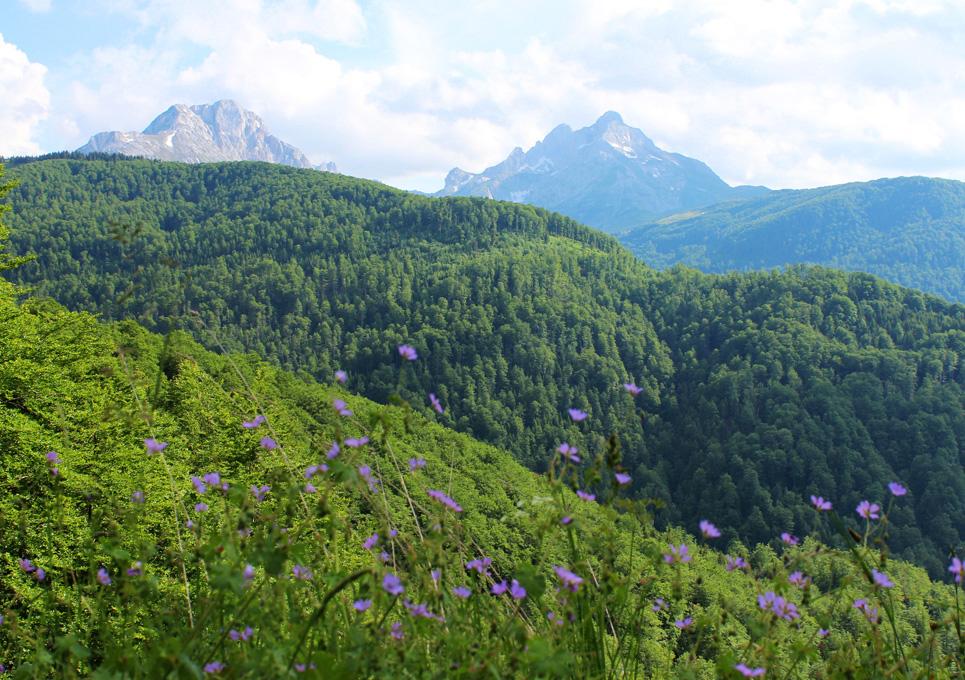 montenegro vuoristo
