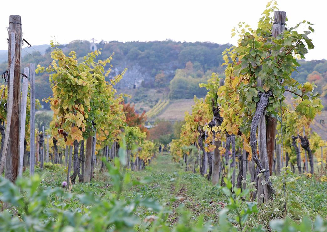 wine-tasting-wien-26