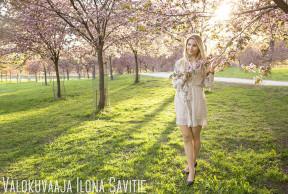 Kukkivat kirsikkapuut